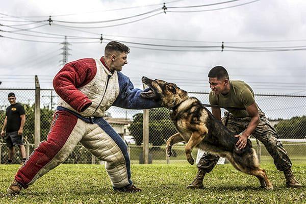 Marine Corps Lance Cpl. Jose Ruiz (right) maintains control of Ciro.