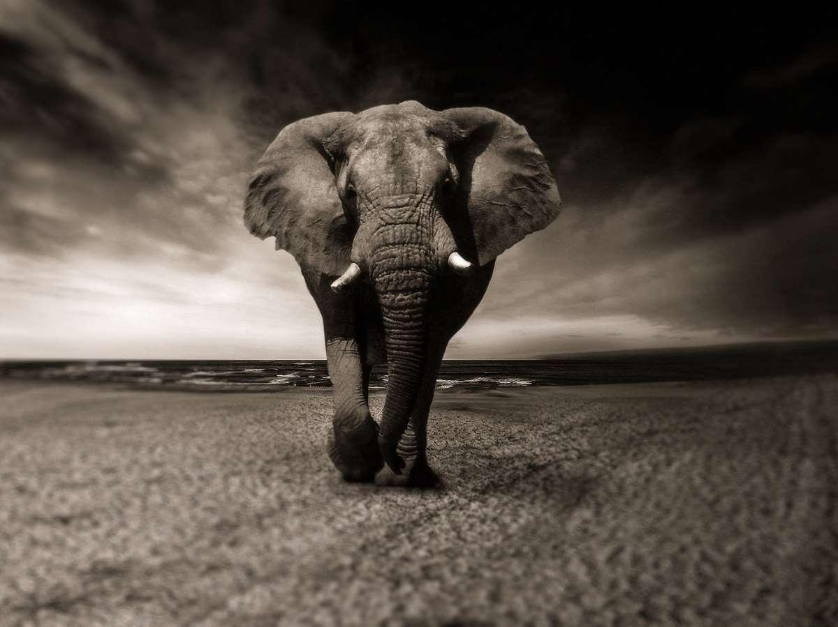 Elephant 2870777